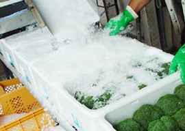 Flake ice snowkey for vegetables preservation